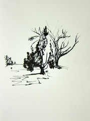 Montpellier Gardens, Cheltenham, 2010. Ink on paper (24 x 32cm)