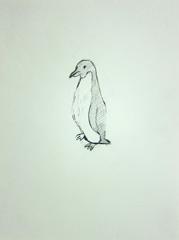 Penguin (Antarctic Exploration), Cheltenham Art Gallery and Museum, Cheltenham, 2010. Pen on paper (32 x 24 cm)